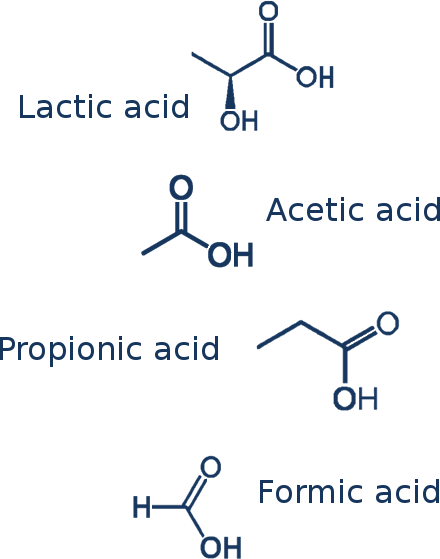 Chemical structures of lactic acid, acetic acid, propionic acid, and formic acid, all acids produced by tooth decay bacteria, which cause cavities
