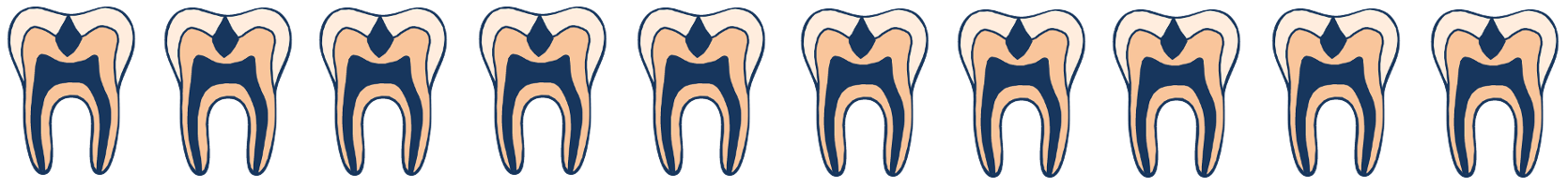 divider of the fluoride teeth page showing multiple copies of a cross-section of a tooth