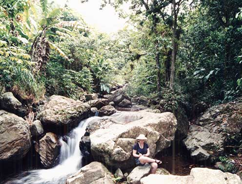 Effie Greathouse doing field work taking notes in a Puerto Rico mountain stream