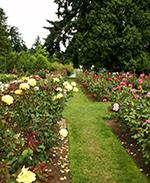 International Test Rose Garden in Portland Oregon