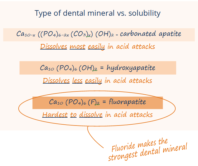 Chemical formulas for carbonated apatite (dissovled most easily in acid attacks), hydroxyapatite (dissolves less easily), and fluorapatite (hardest to dissolve)